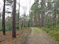 Kiefern/Birkenwald