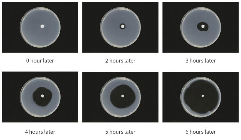 nattokinase enzyme in dissolving artificial thrombus