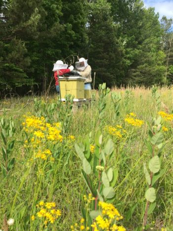 Beehives In Radiant Pasture