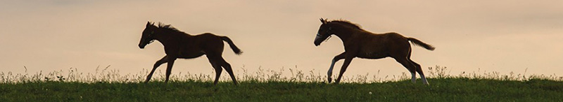 Horses-Headline