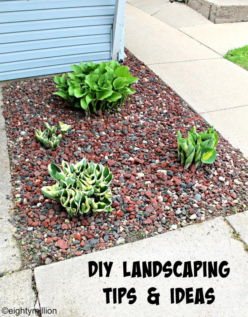 Diy landscaping tips ideas hosta plants eightymillion for Diy landscaping ideas