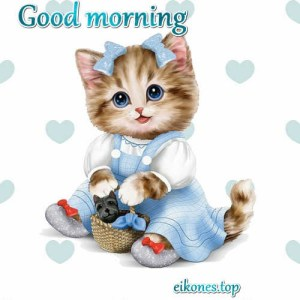 Good morning pictures with beautiful kittens!