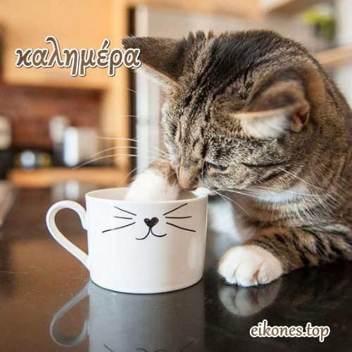 Πανέμορφα γατάκια σας λένε όμορφες καλημέρες! eikones.top