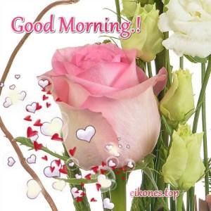 Good morning.!  Εικόνες Τοπ με Όμορφα Τριαντάφυλλα