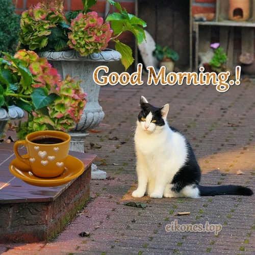 Φθινοπωρινές Εικόνες Για Good Morning.!