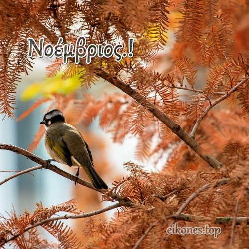 Εικόνες Τοπ Για Τον Μήνα Νοέμβριο.!