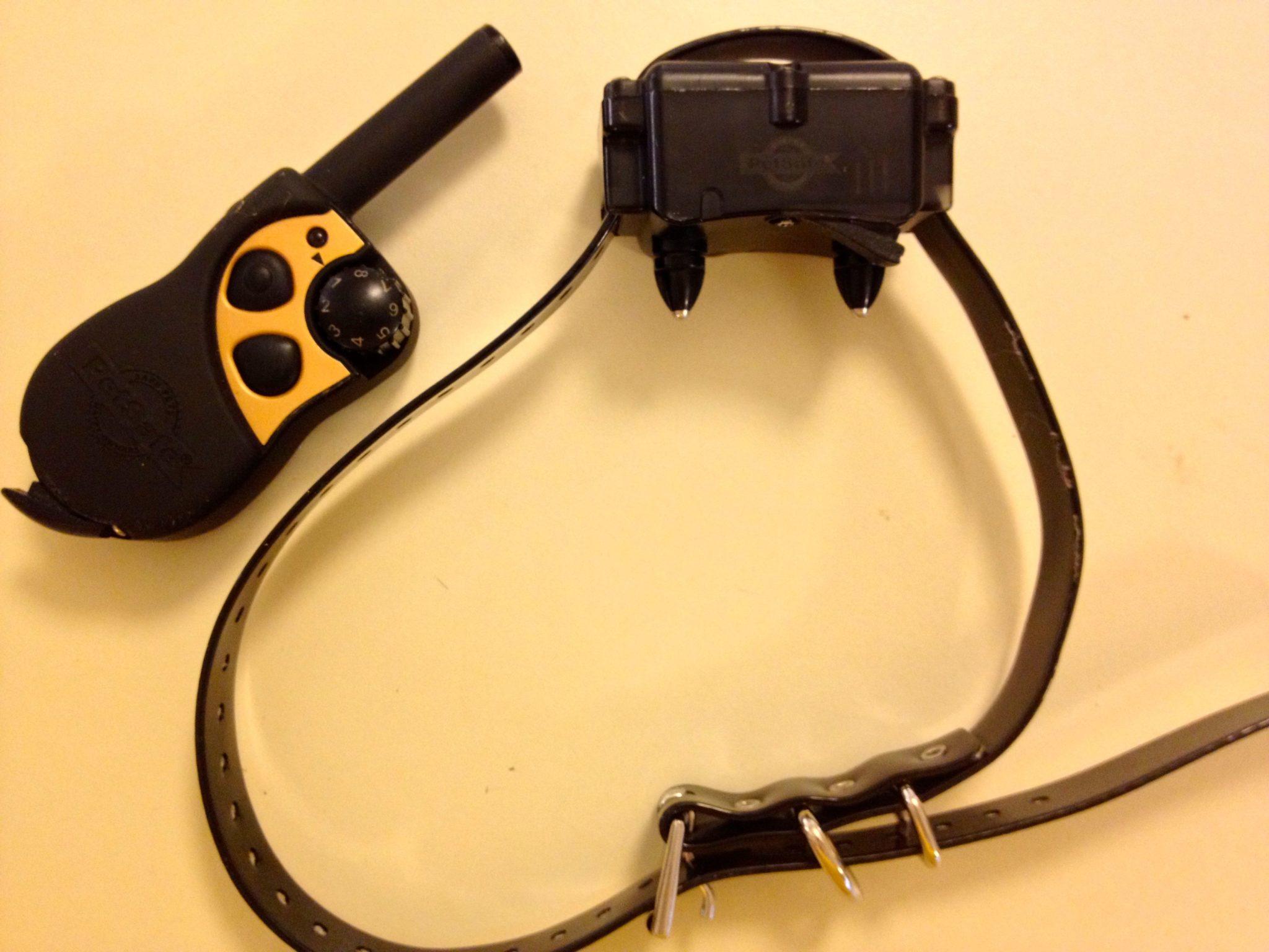 Dog Shock Collar Training Youtube