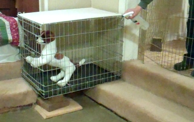 A stuffed dog, brown and white, is in a crate. She is being sprayed with water from a spray bottle.