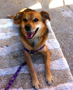 Sable dog on a mat on a sidewalk