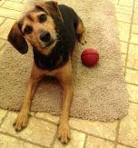 Zani mat with ball