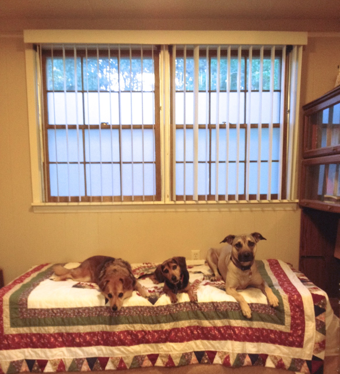the benefits of window film for the household with reactive dogs