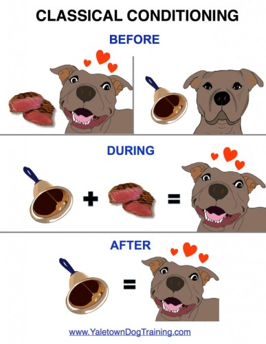 A poster showing a dog, in the first pat, having a happy reaction to a piece of meat, then a neutral reaction to a bell. In the second part, the bell ringing precedes the piece of meat. In the last part, the dog has a happy reaction to the bell.