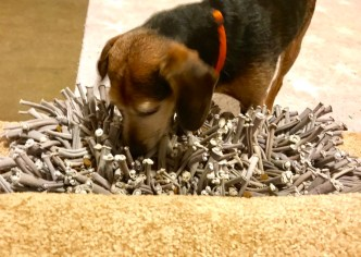 Small black and brown dog eating kibble out of a snuffle mat