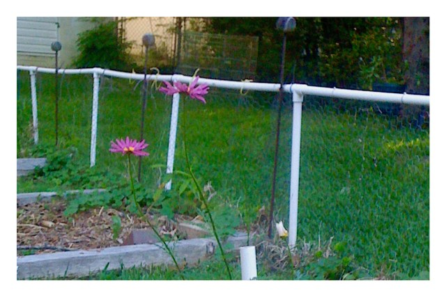 garden fence made of PVC and chicken wire