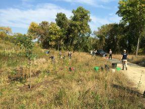Planting along the hillside