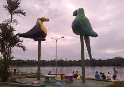 Tropical birds in the park