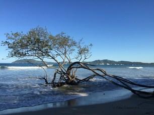Original beach scene in Costa Rica
