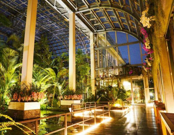高知県立牧野植物園 夜の植物園|Photo by @mori_mittu