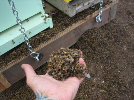 Bier døde-Hayes Valley Farm 2010