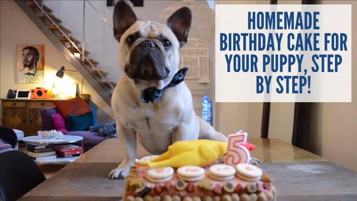 Slik lager du bursdagskake til hunden din på 1-2-3!
