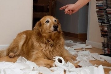 Hilarious guilty dogs trying to prove innocence
