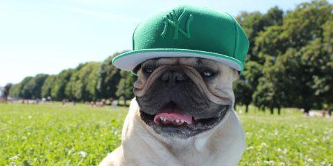 Slik beskytter du hunden din i sommervarmen