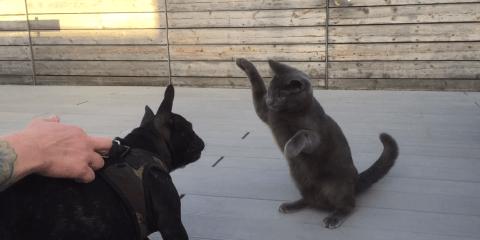 Katter som tror de er sjefen