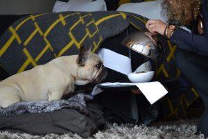 Rabatt på hundemat