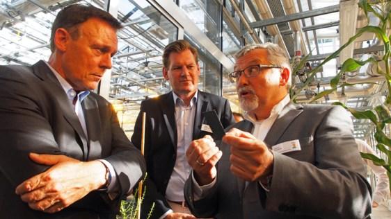 Moderne Pflanzenzüchtung im Gewächshaus (v.l.): SPD-Bundestagsfraktionschef Thomas Oppermann, KWS-Vorstandsprecher Hagen Duenbostel und der Leiter Forschung & Entwicklung bei KWS, Jürgen Schweden.