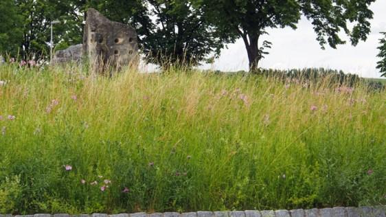 Auf dem Kreisverkehr an der Biogasanlage bei Einbeck wachsen wild Pflanzen.