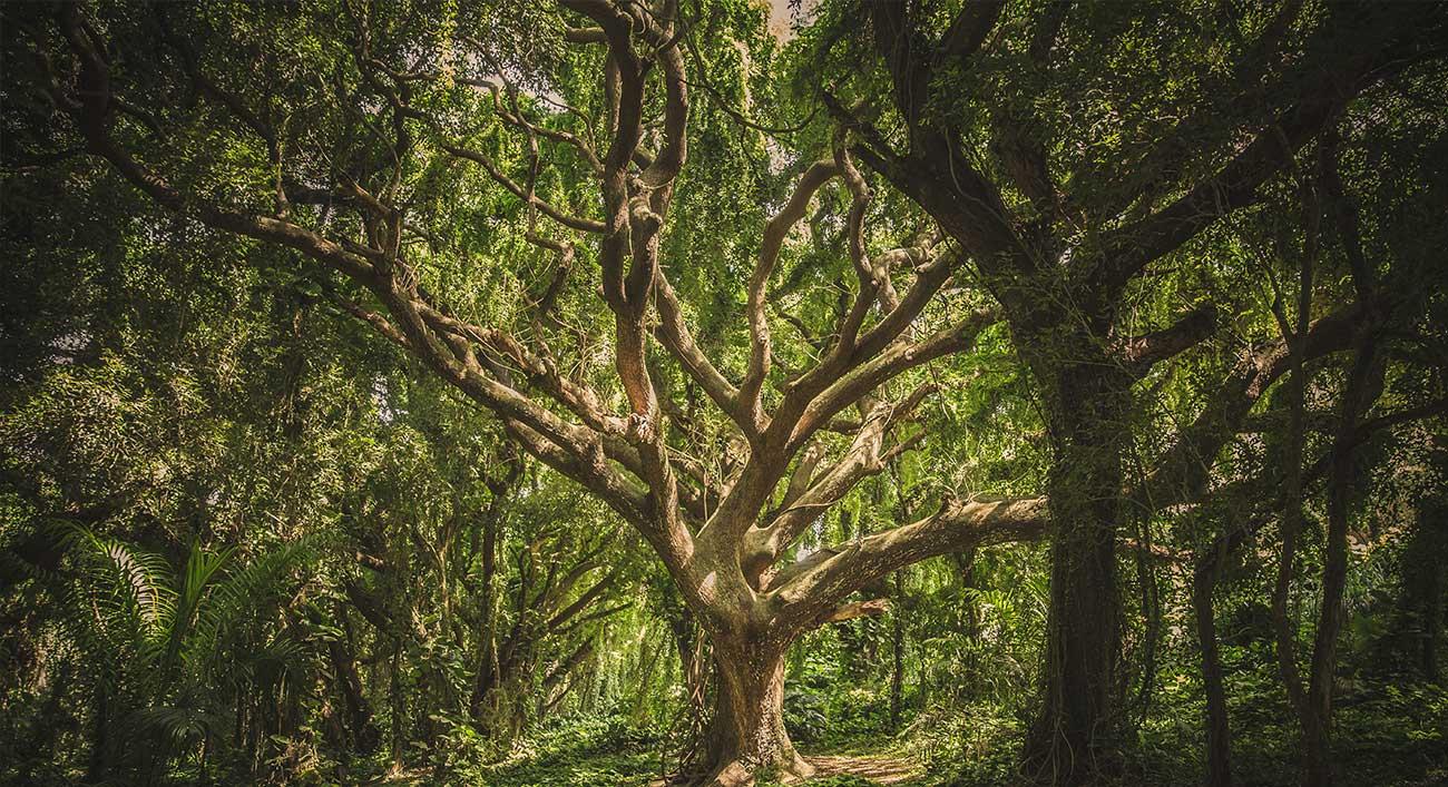 Jungle-Ayahuasca