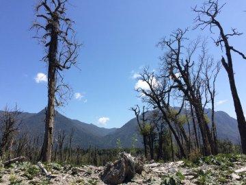 Ruta 7 – Teil 2: Vom Naturpark Pumalín zum Hängegletscher Yelcho