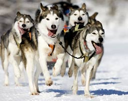 Hundeschlitten Kurs