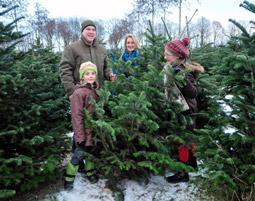 Weihnachtsbaum faellen fuer 2