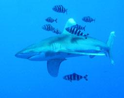 Werden Sie zum Hecht im Haifisch-Revier!
