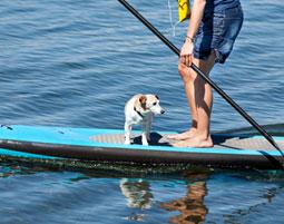 """Das Training fuer """"echte"""" See-Hunde!"""