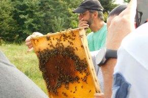 Den Bienen auf der Spur