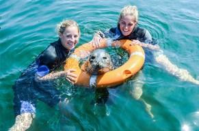 Schwimme mit den Robben auf einer Welle der Sympathie.