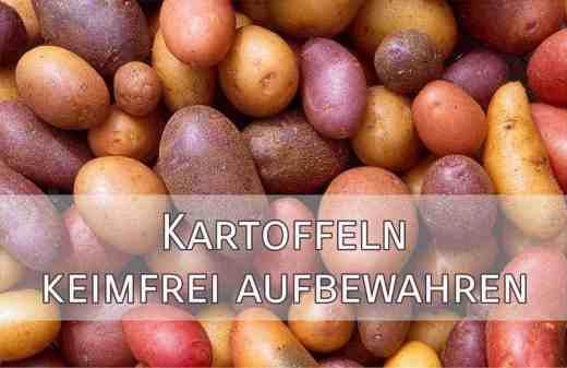 Kartoffeln keimfrei aufbewahren