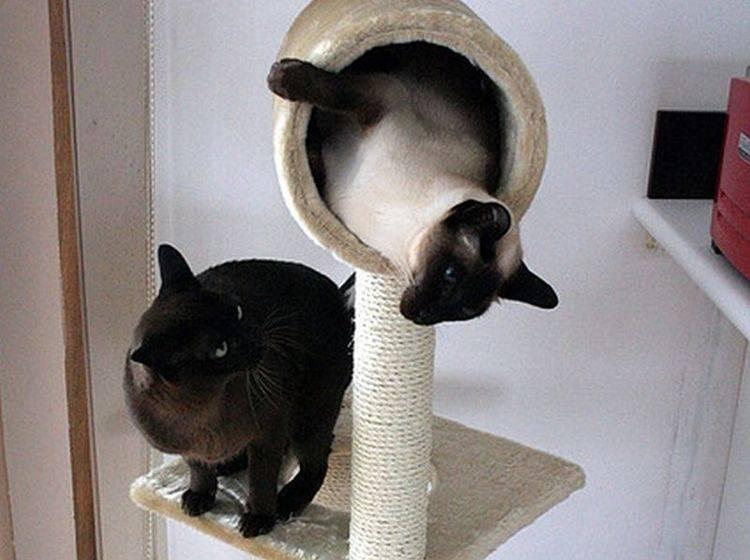 Alles Was Man Braucht Ist Liebe Und Eine Katze Sprüche Suche