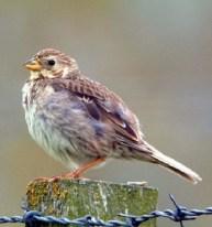 Bird - Pájaro