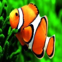 Fish - Pescado