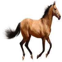 Horse - Caballo