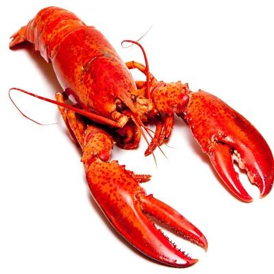Lobster - Langosta