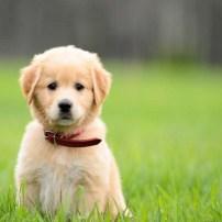 Puppy - Perrito (Cachorro)