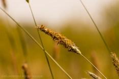 gras_klein_tagged