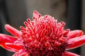 Blume3neu