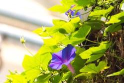 Blume4neu