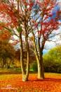 EH1_Bäume - Kopie
