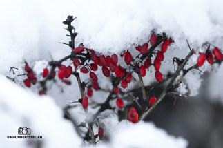 EH1_rote Beeren